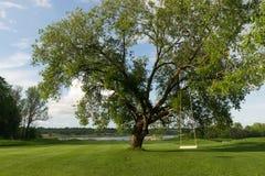 Selbst gemachtes Schwingen, kein Dekor, angebracht am alten Weidenbaum Lizenzfreies Stockfoto