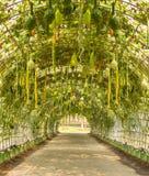 Selbstgezogenes Gemüse der Kioske Lizenzfreies Stockbild