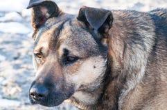 Selbststreunender hund Stockfoto