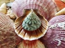 Seleção bonita de shell incomuns do beira-mar Fotos de Stock Royalty Free