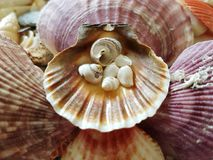 Seleção bonita de shell incomuns do beira-mar Imagens de Stock
