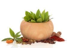 Seleção da erva e da especiaria Fotografia de Stock Royalty Free