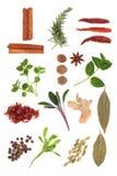 Seleção da especiaria e da erva Imagens de Stock Royalty Free