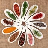 Seleção da especiaria e da erva Fotos de Stock