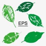 A seleção da floresta sae em um fundo isolado branco Folha para a decoração, teste padrão Elementos do vetor para o projeto ilustração stock