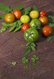 Seleção do tomate Foto de Stock