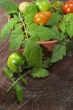 Seleção do tomate em uma bacia da argila Imagem de Stock