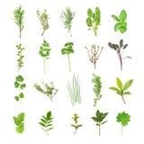 Seleção fresca da erva Foto de Stock