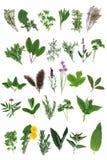 Seleção fresca da erva Foto de Stock Royalty Free
