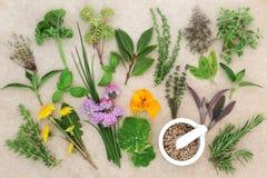 Seleção fresca da erva Imagem de Stock