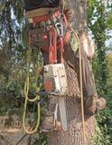 Sele för ` s för trädkirurg fotografering för bildbyråer