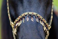 Sele på svart häst Royaltyfri Fotografi