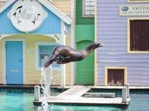 Sele saltar da água em um espetáculo ao vivo foto de stock