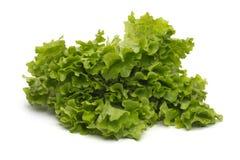 Selección de hojas mezcladas frescas de la ensalada verde Fotos de archivo libres de regalías