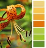 Selección de la carta de color Imágenes de archivo libres de regalías