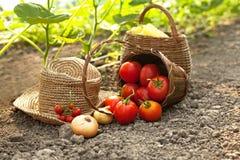 Selección de verduras frescas Fotos de archivo libres de regalías
