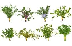 Selección del ramillete de la hoja de la hierba Fotografía de archivo