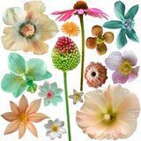 Selección grande de flores coloridas Fotografía de archivo