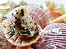 Selección hermosa de cáscaras inusuales de la playa Foto de archivo libre de regalías