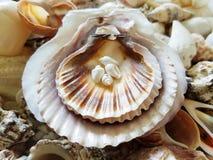 Selección hermosa de cáscaras inusuales de la playa Fotos de archivo