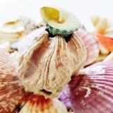 Selección hermosa de cáscaras inusuales de la playa Foto de archivo