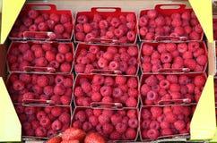 Selección hermosa de frambuesas rojas maduras recientemente escogidas en mercado Imagen de archivo libre de regalías