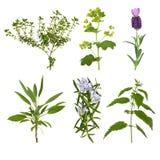 Selección de la hoja de la hierba Fotografía de archivo