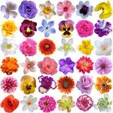Selección grande de diversas flores Imagen de archivo libre de regalías