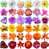 Selección grande de diversas flores Foto de archivo libre de regalías