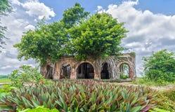 Seleccionar das casas velhas na árvore de banyan bonita Imagem de Stock