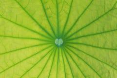 Seleccione el foco de la hoja del loto Foto de archivo libre de regalías