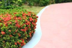 Seleccione el foco, flor del punto en patio Fotografía de archivo libre de regalías