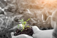 Farmer holding baby plant soil, male agronomist examining quality of fertile agricultural land, close up with selective focus royalty free stock photography