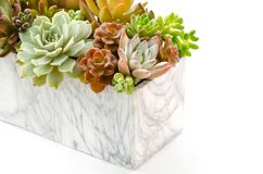 Arrangement of various types red and green succulent flowering houseplants in marble pot planter white background stock photos