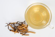 Select focus of mushroom cordyceps CHONG CAO this a herbs. With a glass of water, add water from the Ophiocordyceps sinensis ext. Ract. Medicinal properties in stock photo