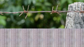 Select focus wood fence or wall and blur barbed wire backgrounds. Wall wood fence and blur barbed wire green nature backgrounds Royalty Free Stock Photos