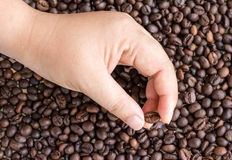 Select one  coffee beans in human hands Stock Photo