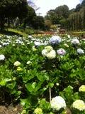Selecta trädgård Malang Indonesien Royaltyfria Foton
