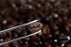 Selected a best coffee beans Royalty Free Stock Images