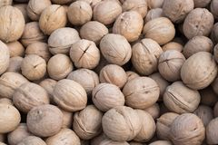 Large walnuts in natural light stock photography