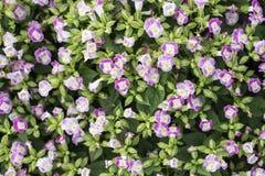 Selecteer nadrukbloemen van struik roze bloemen, royalty-vrije stock foto