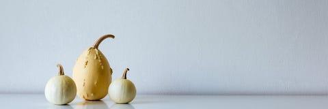 Selectie van diverse pompoenen op witte plank tegen witte muur Moderne seizoengebonden ruimtedecoratie Pompoenenbanner royalty-vrije stock afbeeldingen