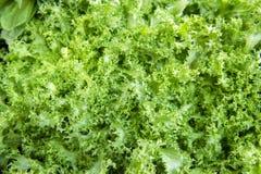 Selectie van groene en verse groenten uit de markt van een landbouwer royalty-vrije stock foto's