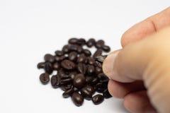 Selectie van het geroosterde zaad van koffiebonen Persoon met in hand korrels Macro Geheel voedsel - Beeld stock afbeelding