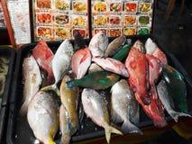 Selectie van vissen bij ingang van voedseltribune, Borneo, Maleisië royalty-vrije stock afbeeldingen