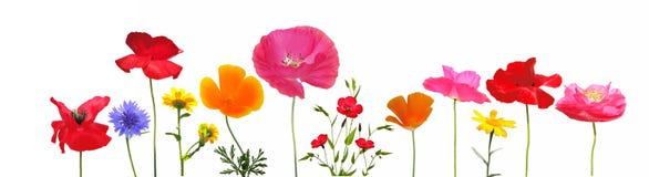 Selectie van weidebloemen royalty-vrije stock foto's