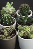 Selectie van zes kleine cactussen en succulente installaties in potten royalty-vrije stock fotografie