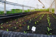 Selectief van groene zaailing, Close-up van kleine jonge boompjes in tuin Royalty-vrije Stock Afbeelding