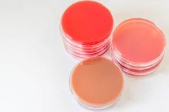 Selectieve Media voor de Bacteriëngroei Royalty-vrije Stock Foto's
