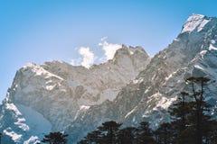 Selectieve nadruk: De Yumthangvallei of de Vallei van Bloemenheiligdom, zijn een aardschoonheid op weidenspecies van de rododendr royalty-vrije stock fotografie